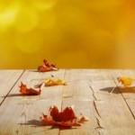 herfstbladeren_levenseinde,_zorgenz